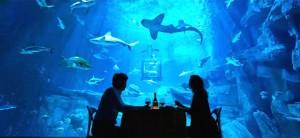 Diner avec les requins